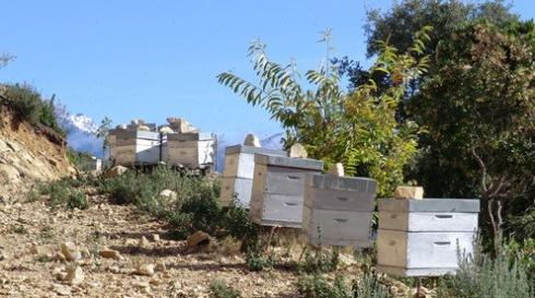 De bijenkasten van Miel de Salice staan middenin de Corsicaanse bergen.
