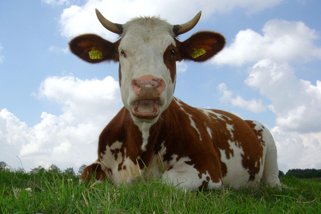 2 bio koe