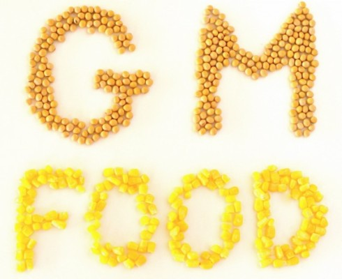 5 GM food